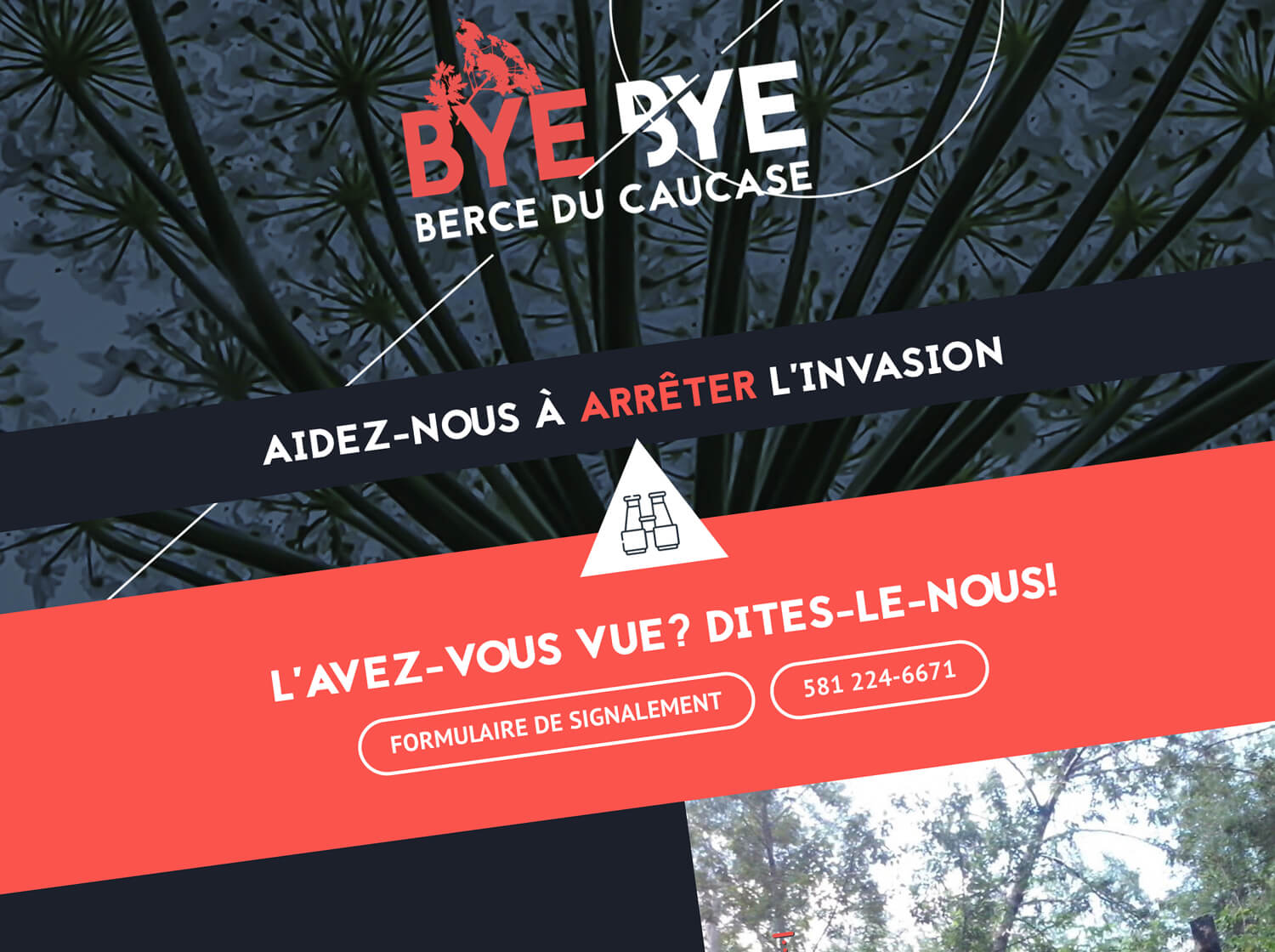 Interface site web Bye Bye Berce du caucase